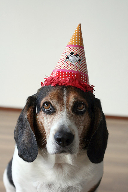 Party Animal by prettyinprint on Flickr.