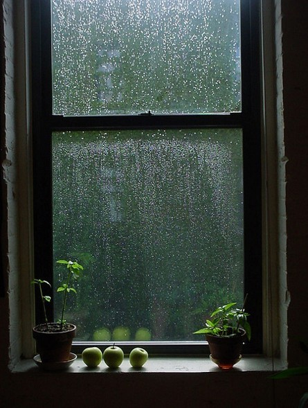 quirkycarousel:  Rain on the Window ~