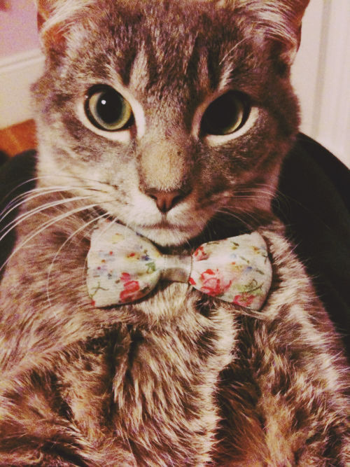 I know I've reblogged this before but LOOK AT THIS CAT.