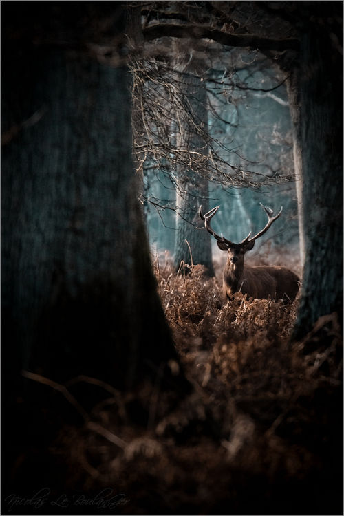 "morgondagg:  ""Between the old oaks"" by Nicolas Le Boulanger"