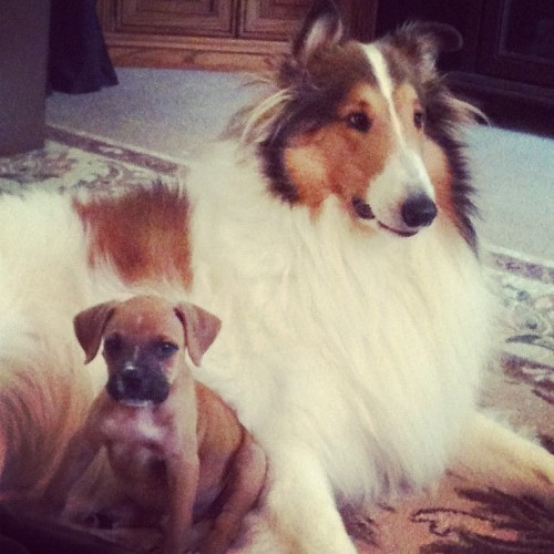 Alfie and baby Axl!
