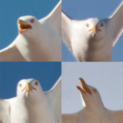I was on the roof taking randoom pics when suddenly….SEAGULLS. Why are they so angry?? D: