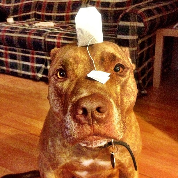 #stuffonscoutshead - #teabag the PG version.  (Taken with instagram)