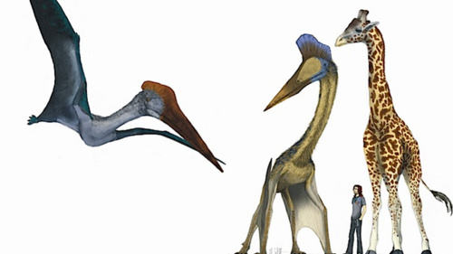 "What would the world be like if pterosaurs and humans coexisted today? (Part II)  Yesterday, I posted about life with petosaurs if they still were with us. What would it be like? How would they behave? Could you ride one to work? Well, here is part two that io9.com has put out! This second part covers topics like: ""Would pterosaurs be garbage monsters?"" ""Where would these animals live?"" ""Would they try to eat us?!"" If you enjoyed part one, then definitely read through their second bit!"