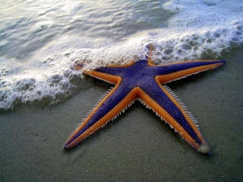 (via Purple and Orange Starfish on the Beach by TheMarque@ Flickr Creative Commons. - Pixdaus)