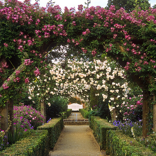 Mottisfont Abbey Garden, Hampshire, UK (by ukgardenphotos)