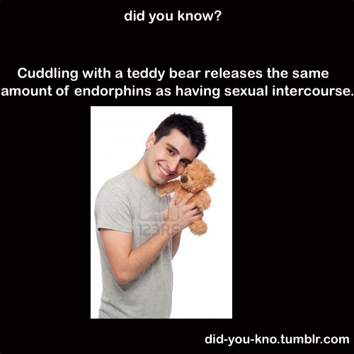 did-you-kno:  Source  Especially if you're humping the teddy bear…..