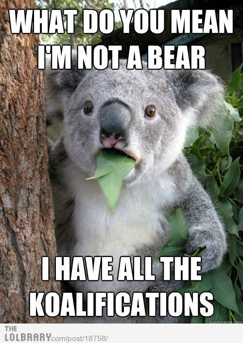 (via What do you mean I'm not a bear? | The Lolbrary - New Funny Random Pictures Added Daily)