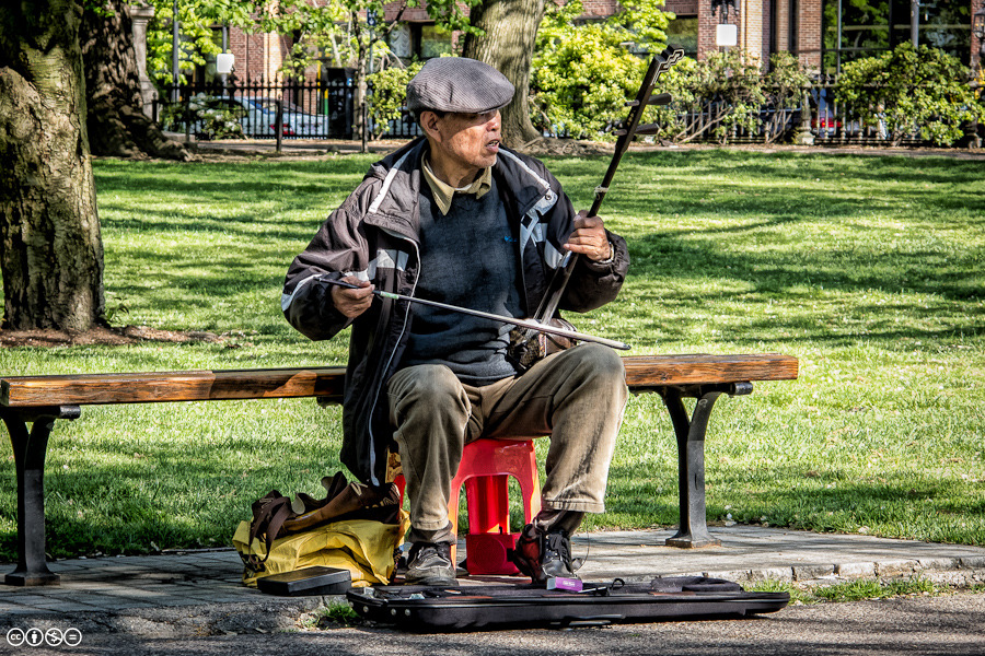 Erhu Player, Boston Public Garden
