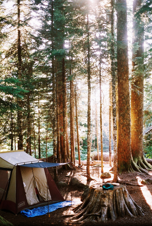 really want to go camping.