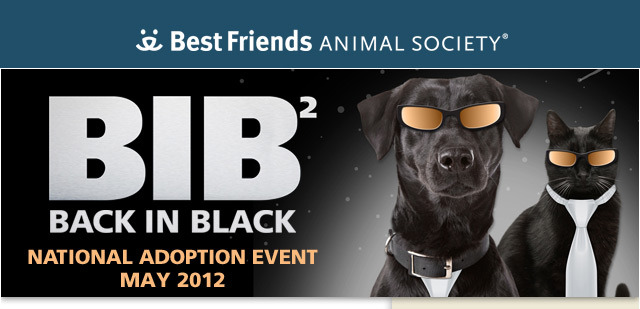 "Change the future for a beautiful black dog or cat ""Last year's Back in Black adoption promotion helped find homes for more than 900 black dogs and cats nationwide. And this year, with your help, we hope even more deserving pets will find homes. Black dogs and cats make wonderful companions. But they're often overlooked for adoption. So Back in Black is all about encouraging people to give them a second look — and a second chance. Adopt Today! Find a local Back in Black event near you and show your support for our Network partners. Check out more than 200 gorgeous black dogs, cats and rabbits available for adoption right here at the Sanctuary. During Back in Black 2 this May, adoption fees for all Best Friends black dogs, cats and rabbits will be waived! Learn how to adopt today. You can be a real-life hero to a homeless pet. Change the future for one lucky animal by adopting a black dog or cat during the special Back in Black event! Together we can bring about a time when there are No More Homeless Pets®."""