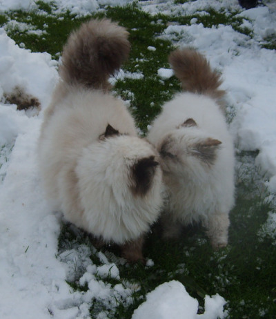 cybergata:  Snow kiss