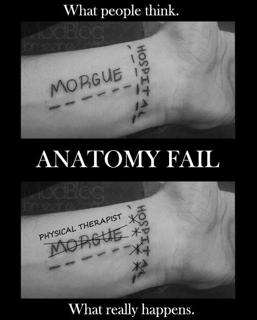bljad:  drfrankscali:  I created this image after seeing some terrible tattoos and scars. There is no major artery down the center of your wrist. Silly humans. -Dr. Frank Scali  Okay horribly depressed and suicidal kiddies who want to cut their wrists in a weak suicide attempt here is a basic anatomy lesson so you can do it right. In your upper arm you have an artery called the Brachial artery, at your elbow this artery splits into two new arteries, the Radial and the Ulnar, these two arteries diverge to either side of your arm, (one goes left, one goes right) So as the OP stated there isn't a major artery running down the center of your wrist, however there are two running down your forearm and wrist. Here's a diagram: