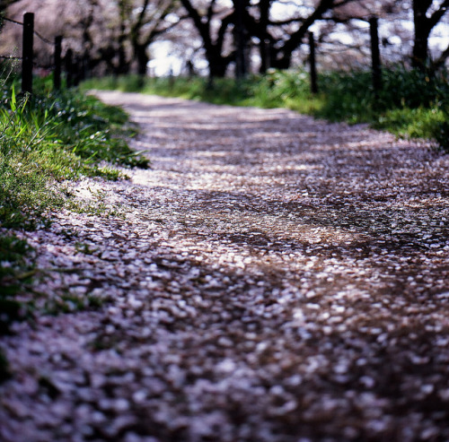 magic-spelldust:  path in pink by ditao on Flickr.