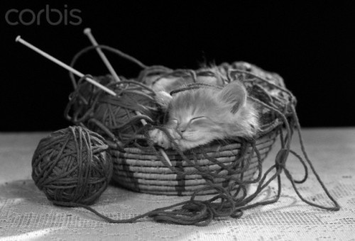 Will kittens, baskets, and yarn ever not go together?  Kitten sleeping in knitting yarn basket, 1950s. Source: Corbis.