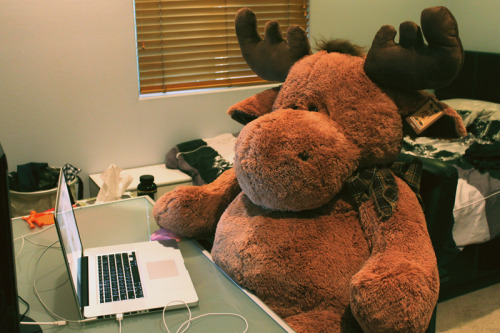 benjamin the hipster moose escaped the zoo to surf the web.
