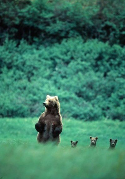 kyleagee:  And this little bears, is how we look around.   I'm going to ride a bear one day.