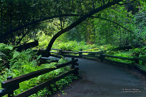 woodendreams:  (by Darvin Atkeson)  Redwood Forest, San Francisco, California, US.