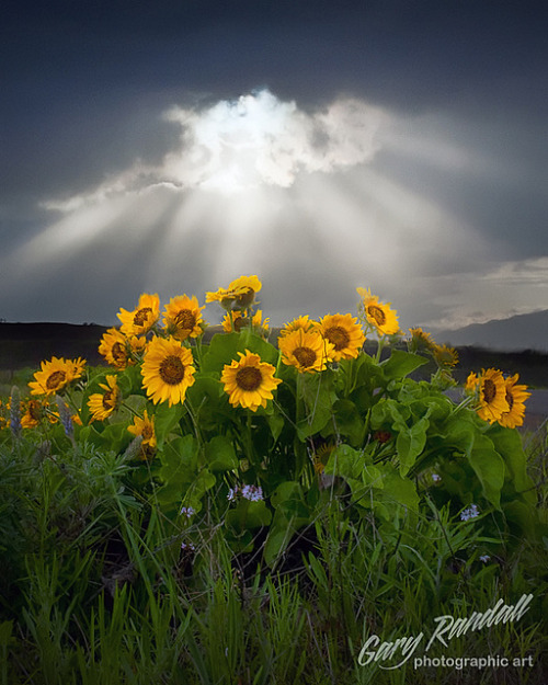 llbwwb:  Wildflowers by Gary Randall