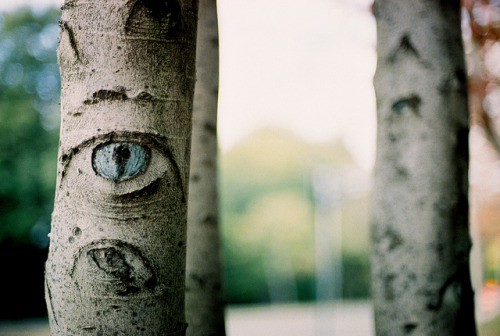 stolenfootprints:  Eye Tree by LaurenAC on Flickr.
