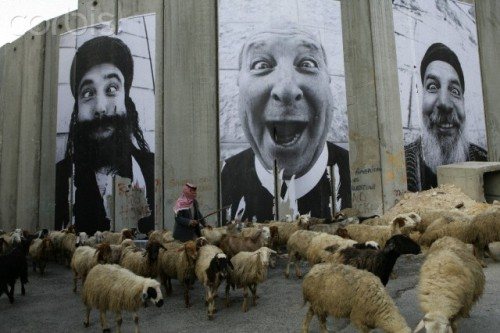fotojournalismus:  A man herds sheep next to the separation wall between Israel and Palestine in Bethlehem, Palestine on March 19, 2007. [Credit : Alexandra Boulat]