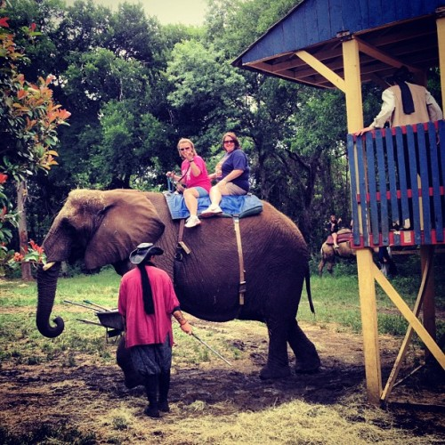 Elephant rides!!! I should have done it 🐘 oh well, there's always next year! (Taken with instagram)