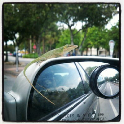 Lizard on my mirror (Taken with instagram)