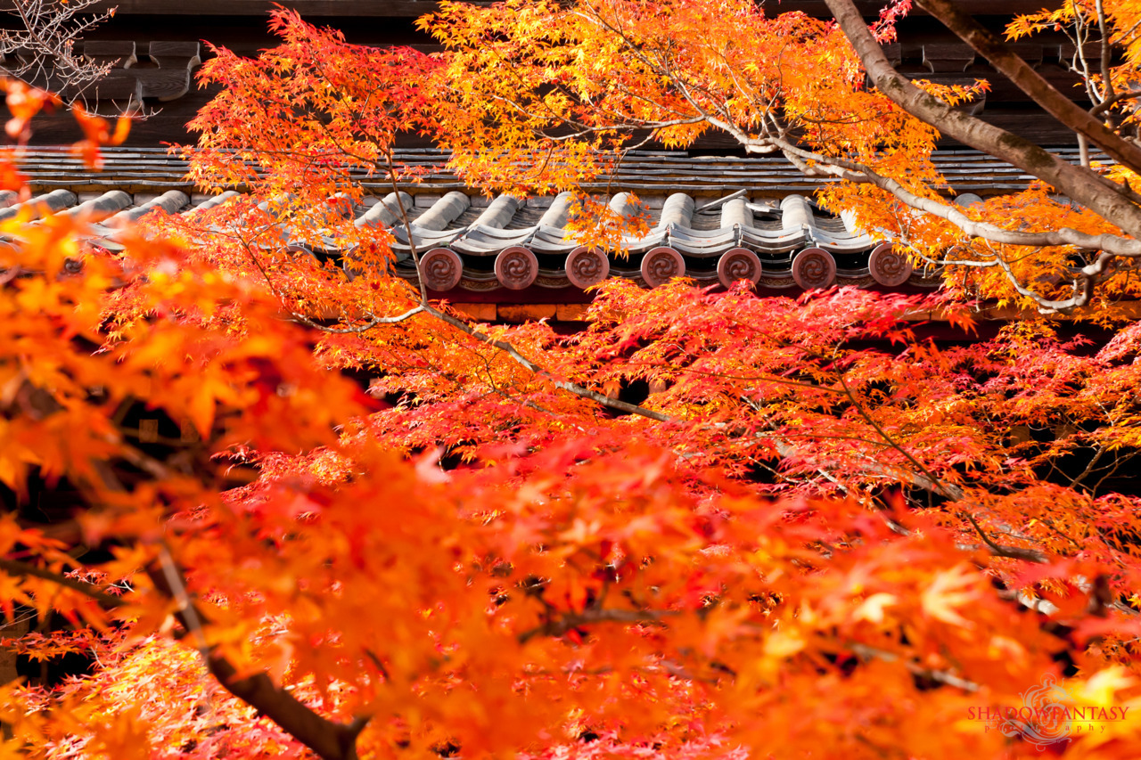 Fall colors at the Shinnyo temple in Kyoto, Japan.