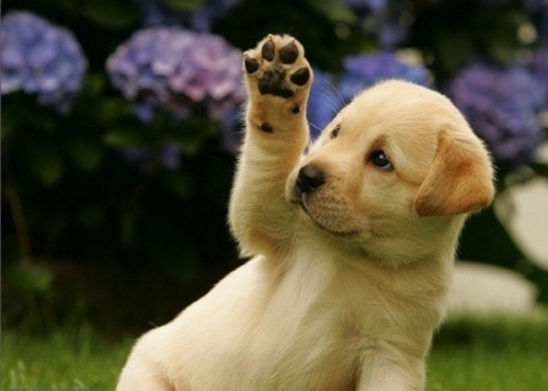 Too cute!  See I can do a high five!