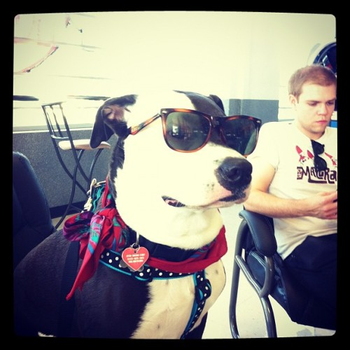 #sunglasses #dog #indie #inside  (Taken with instagram)