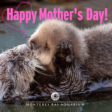 To mothers everywhere: have a great day Sunday!