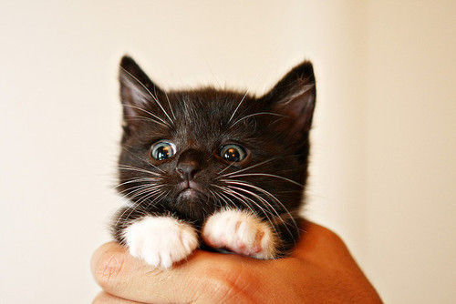 fluffy-kittens:  Taken from HERE