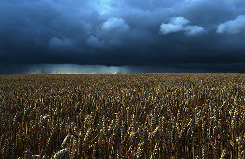 seen-ah-ree:  Threat of rain over Clipston (by ♫ Russ Hamer)