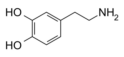 holymoleculesbatman:  This molecule is called Dopamine.  Dopamine has the enormous job of regulating mood, behavior, sleep and cognition. It also is associated with motivation and reward. Dopamine helps with decision-making and creativity.