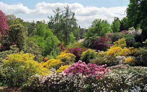 Leonardslee Gardens, West Sussex, UK by ukgardenphotos on Flickr