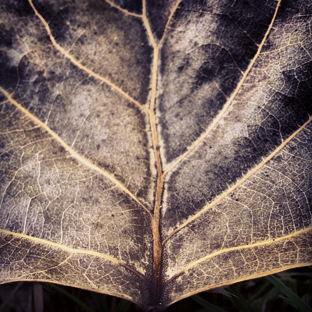 Branch #dry #leaf #line #brown #beautiful #cool #2012 #rikfoto #may #photooftheday #iphonephotography #photography  (Taken with instagram)