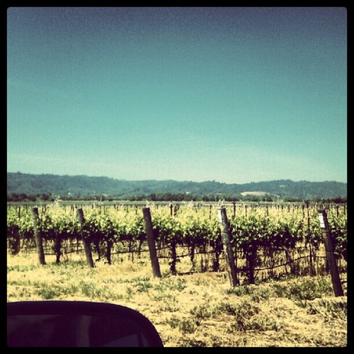 #Vineyards #sonoma #california #grapes (Taken with instagram)