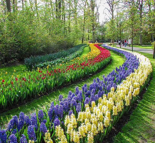 landscapelifescape:  Keukenhof, The Netherlands In a row….. (by Hetty 51)