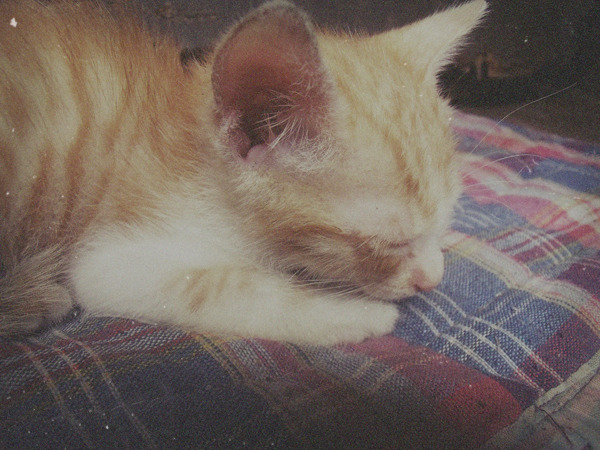 "New kitty named ""Peachi""."