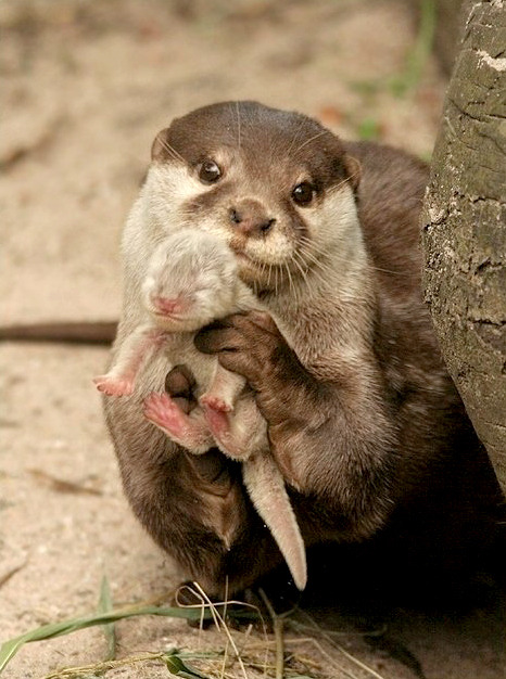 imwithkanye:  Happy Motter's Day. [image]  This is otterly adorable.