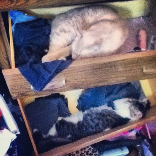 Kat and Buffy think these drawers are God's gift to Earth. (Taken with instagram)