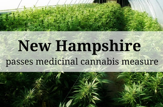 "highgirlll:  The New Hampshire house of representatives recently passed Senate Bill 409, by a vote of 236 to 96. This is a wonderful Bill that allows for qualified medical marijuana patients to cultivate and have their own medicinal cannabis for therapeutic purposes.  ""The veto-proof majority approval came following renewed veto threats by Democrat Gov. John Lynch, who previously rejected a separate, more restrictive medical marijuana measure in 2009."" Even though the New Hampshire Senate had already passed a relatively similar cannabis measure in March by a vote of 13 to 11; because their was a fiscal note (written estimate of the costs, savings, revenue gain, or revenue loss that may result from implementation of a bill) added to this bill, it must now be sent to the House Finance Committee before the Senate will be able to do a concurrence vote, and although Gov. Lynch is expected to veto this bill once it's passed and presented to him, with only three more senate votes, his anticipated veto will be overrode.  ""Separate legislation — HB 1526, which sought to decriminalize the possession of up to one-half ounce of marijuana for adults for non-medical purposes — was rejected by the Senate on Wednesday. The House had previously voted in favor of the measure in March."" —10 days ago.  Hopefully New Hampshire will get the required Senate votes to override any veto that may occur. Individuals deserve an organic medicinal alternative, and hopefully the people of New Hampshire will soon have that right; a right we should have had many years ago.  Stay High, Stay Educated, STAY REAL.  Source:    NORML"