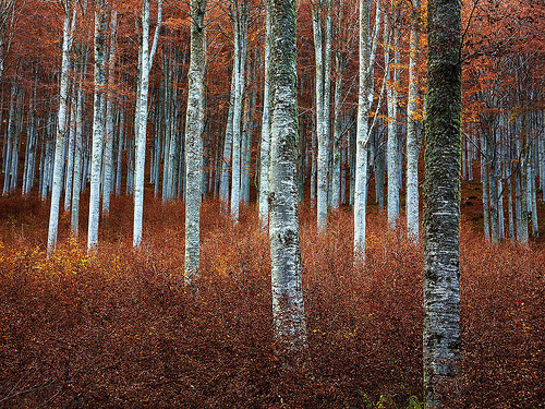 Beech Wood IV (by rachel_thecat)