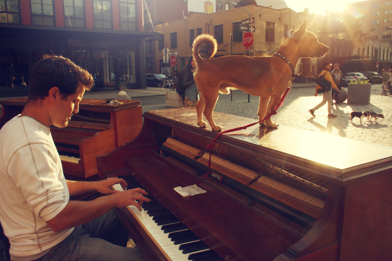 "Pianoing Across the World Dotan Negrin spent almost a year playing piano across America — on street corners, in farmer's markets, and anywhere else that would have him — and documenting it all on his blog. Now back home in New York, Negrin is taking on a new challenge: pushing his piano (and his dog Brando), by foot, through the chaotic streets of New York City, to bring his music to busy New Yorkers and avoiding taxi collisions along the way. You can check out his progress on his Tumblr, Piano Across NYC. We asked him about his cross-country trip and what it's like weaving a piano through New York traffic. What does it take to push a piano uptown? The roads are terrible. There are potholes everywhere and plenty of obstacles. I broke my fingers when my piano got stuck in a pothole and fell backwards. But the cabs are the worst, because there are times when I have to push the piano in the middle of the street so that I don't run into any parked cars. How many different ways have you tried to cart your piano around the city? I've tried a traditional dolly, with a couple of straps. That was wobbly. I tried building my own dolly with a hand truck and two dollies (my dad's idea). It didn't work so great. I researched having a piano bicycle actually made for me — but it was going to cost $2,500. I thought about buying a food cart and taking off the box, but it would have required a welder. Finally, after a whole lot of research, I landed on something called the all-terrain dolly. I had one built for me out of a family-owned business in Atlanta. Before you returned to New York, you traveled for months with just your piano and your dog. Why? I wanted to combine everything I loved to do: travel, make music, meet people. I figured I would get a lot better if I relied on the piano to eat and to pay for gas. I did. Where was the most interesting place you visited? I played on the edge of a cliff in Yellowstone. I played on the edge of the Grand Canyon. In Portland, Oregon, a guy came up to me and pounded on my keys because I was taking the attention away from him; he was playing guitar on the other side of the farmer's market. But I think the craziest place I played was inside a redwood tree. Any particular characters you met along the way? Cuba Gooding, Jr. came up to me and dropped a $20 in my bucket with a huge grin on his face. I also met Kevin Jonas. He tweeted a photo of me. This one time, a woman came up to me, dropped a $5 bill in the bucket and said, ""This $5 is for Brando, not you."" I tried to give it to Brando but he wouldn't take it. I gave him a few dog treats instead."