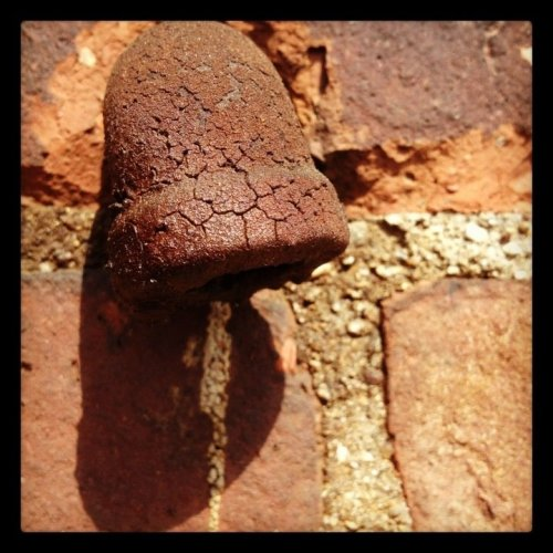 Rusty Iron Pipe. Love the crazing.Rusty #iron #pipe #bridgeport #305knowlton #bridgeport #CT #iPhone #photography #industrial #urban(from @photobeaulieu on Streamzoo)