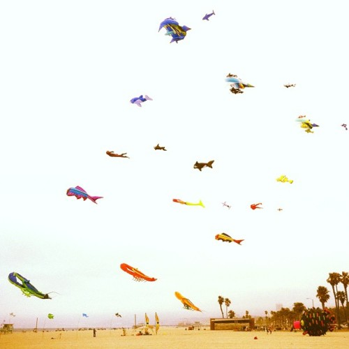 flying.fish (Taken with Instagram at Venice, CA)