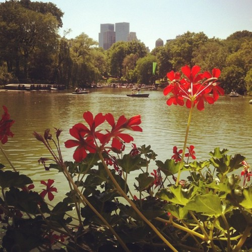 "Brunch by the water. Central ""Perk"" (Taken with instagram)"
