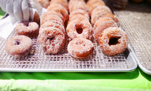 apple cider donuts @ Brimfield, MA