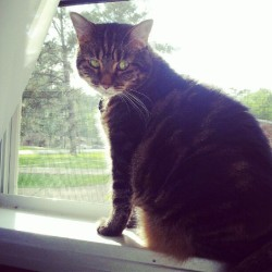Murmur loves it when we open the window. (Taken with instagram)