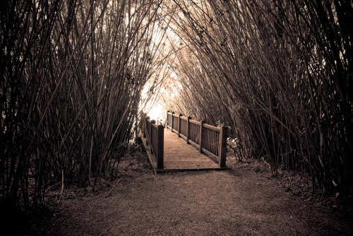 Bridge thru Bamboo by StevenSmith1 on Flickr
